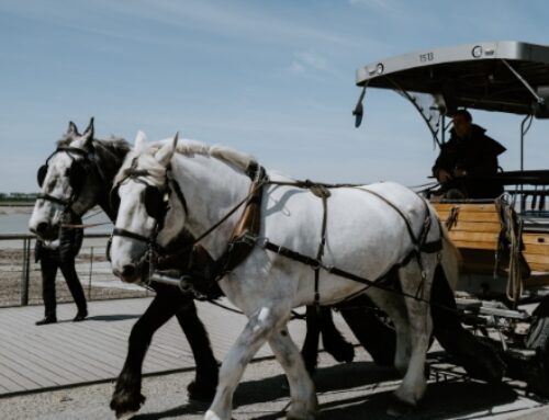 Cart v Horse – which comes first?